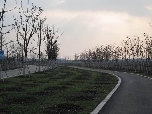 2011年沥青道路工程